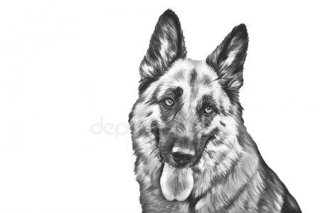 Картинки собака для детей нарисованные   картинки (23)