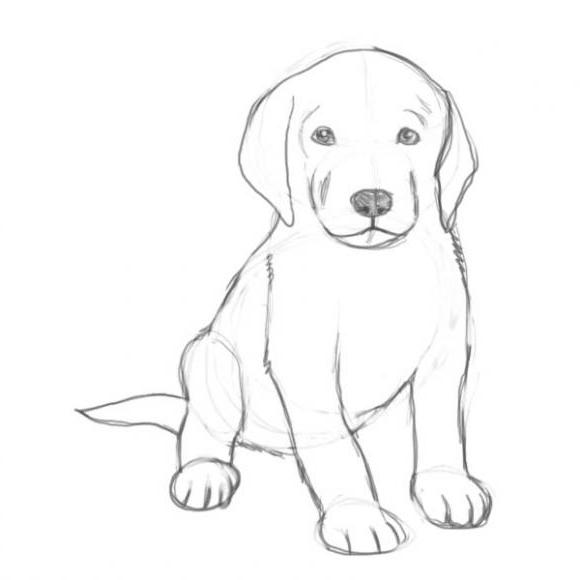 Картинки собака для детей нарисованные   картинки (25)