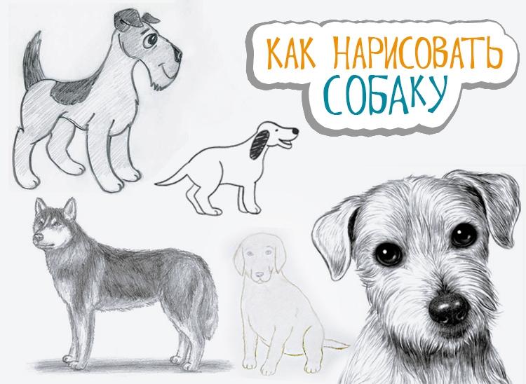 Картинки собака для детей нарисованные   картинки (7)