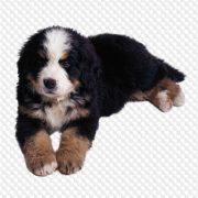 Картинки собака на прозрачном фоне для детей 023