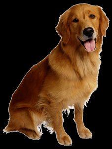 Картинки собаки для детей на прозрачном фоне (25)