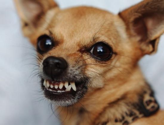 Картинки собаки черно белые картинки и фото003