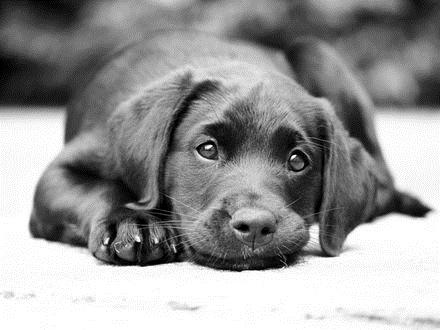 Картинки собаки черно белые картинки и фото004