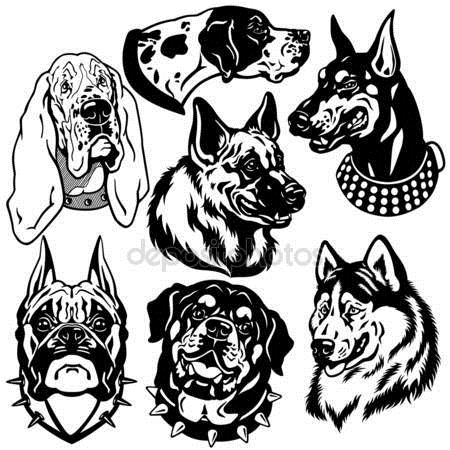 Картинки собаки черно белые картинки и фото005