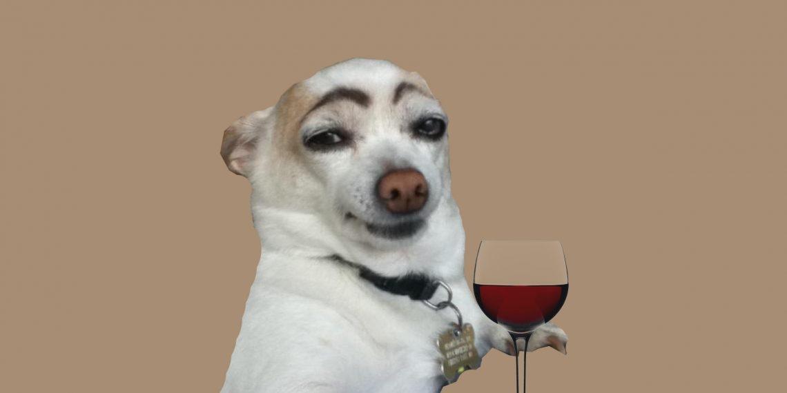 Картинки собаки черно белые картинки и фото009