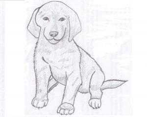 Картинки собак для срисовки карандашом024