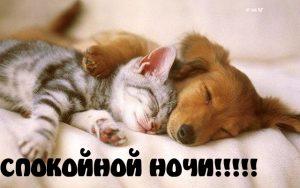 Картинки спокойной ночи котик 022