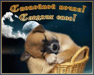 Картинки спокойной ночи собачки021