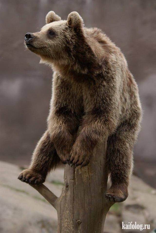 смешные картинки медвежата фотографа