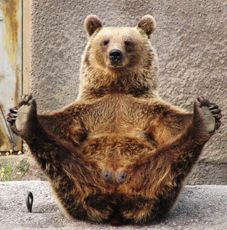 Желаю тебе, картинка смешные медведи