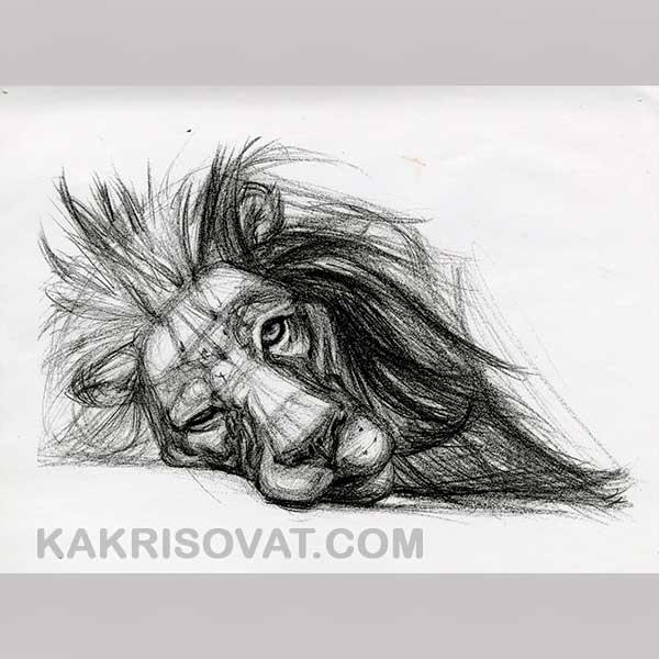 Картинки с животными для срисовки   лучшие рисунки001