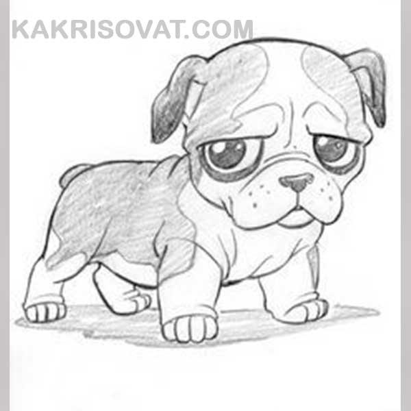 Картинки с животными для срисовки   лучшие рисунки021