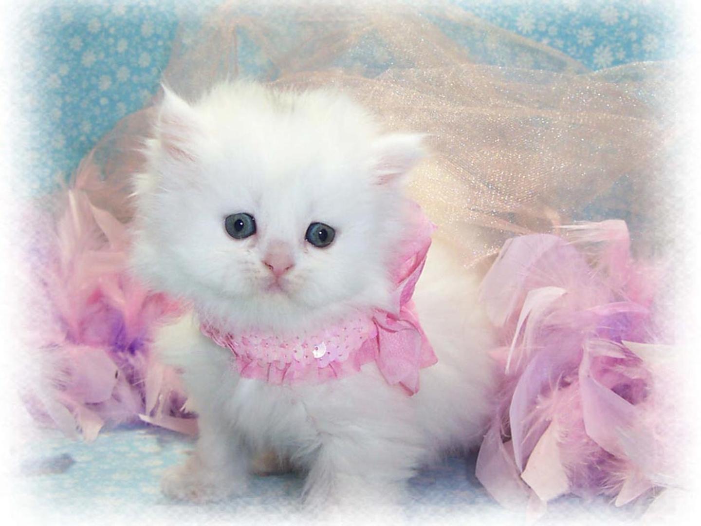 Картинка белая кошка с надписью