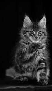 Картинки с котятами на телефон   скачать бесплатно (51)