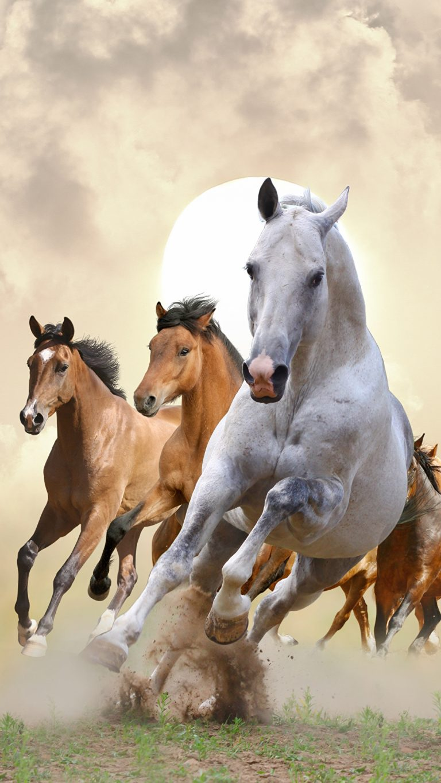 Картинки с лошадьми на телефон - скачать бесплатно