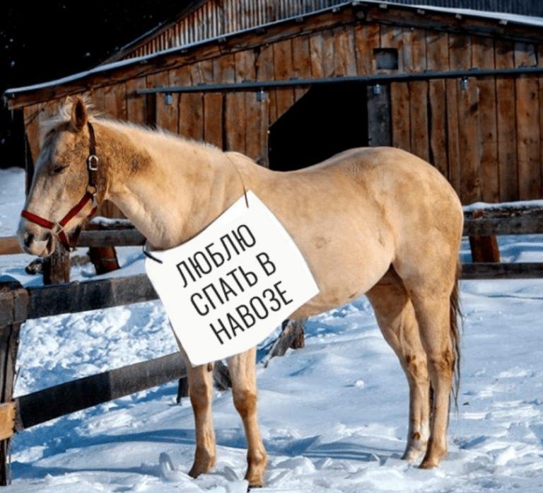 Мая аппликация, картинка с надписью год лошади