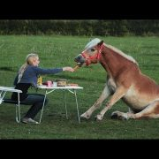 Картинки с лошадью прикольные 022