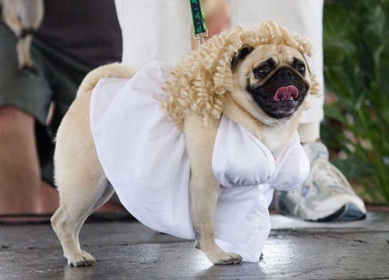 Собаки в смешной одежде картинки, блестящие открытки