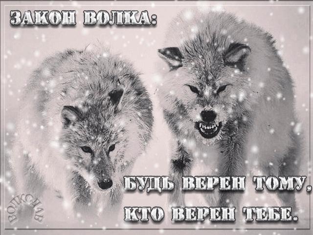 Картинки с надписью волк   подборка 025