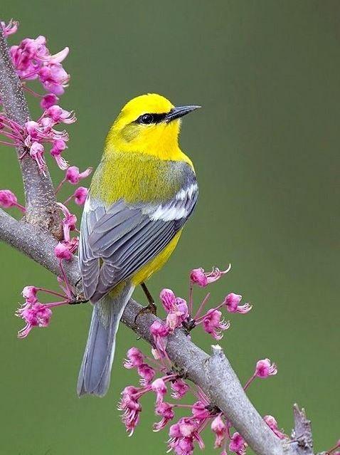 Картинки с птичками красивые   подборка 001