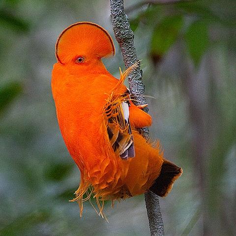 Картинки с птичками красивые   подборка 002