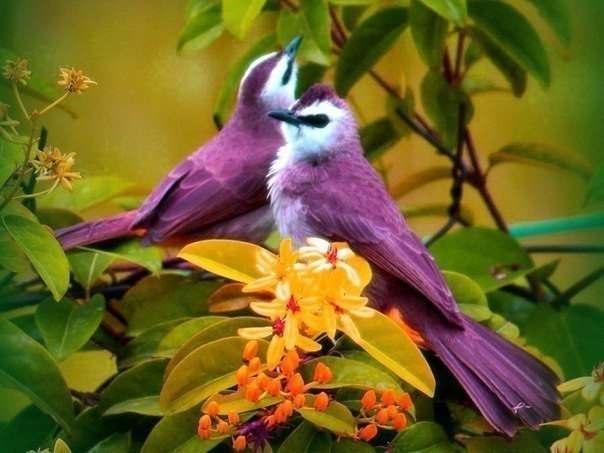 Картинки с птичками красивые   подборка 003