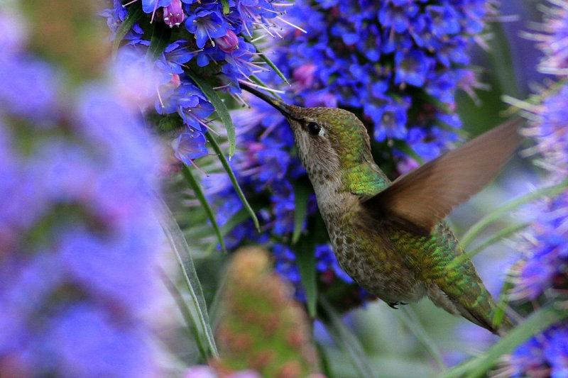 Картинки с птичками красивые   подборка 004