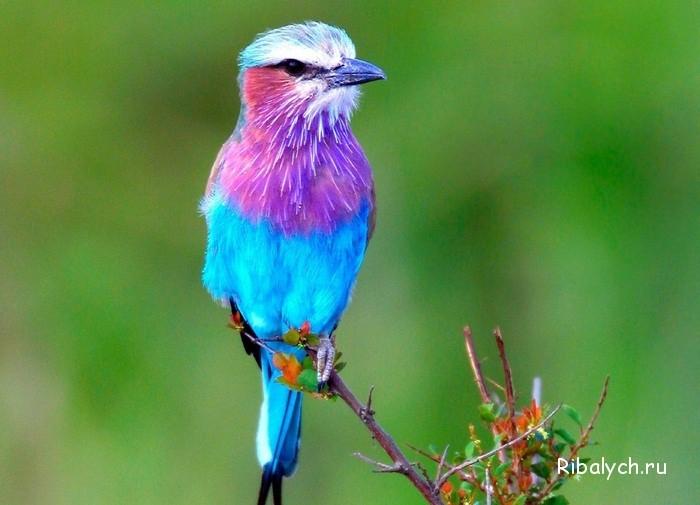 Картинки с птичками красивые   подборка 005