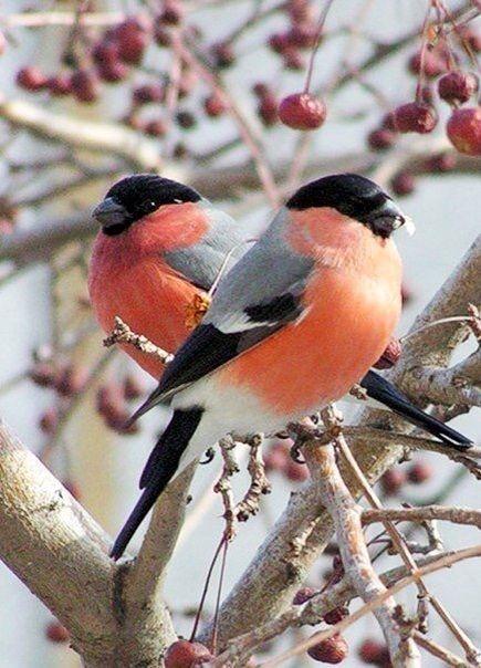 Картинки с птичками красивые   подборка 006