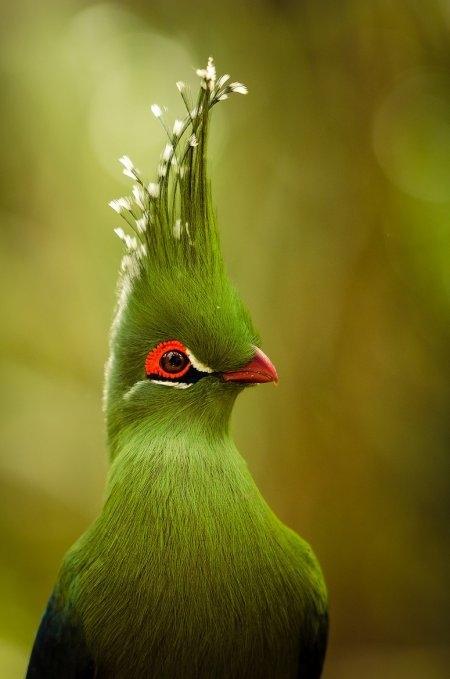 Картинки с птичками красивые   подборка 009