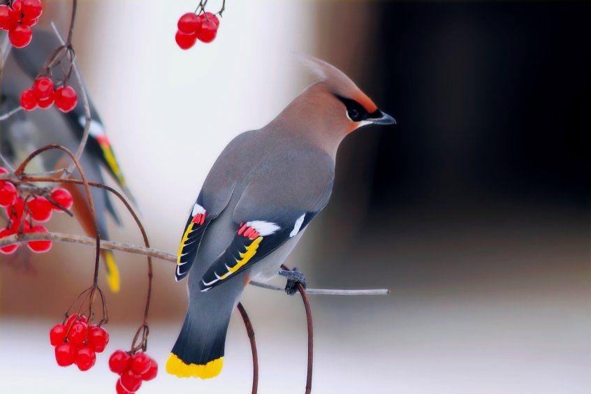 Картинки с птичками красивые   подборка 010