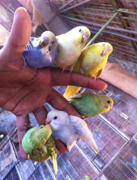 Картинки с птичками красивые   подборка 012