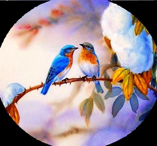 Картинки с птичками красивые   подборка 013