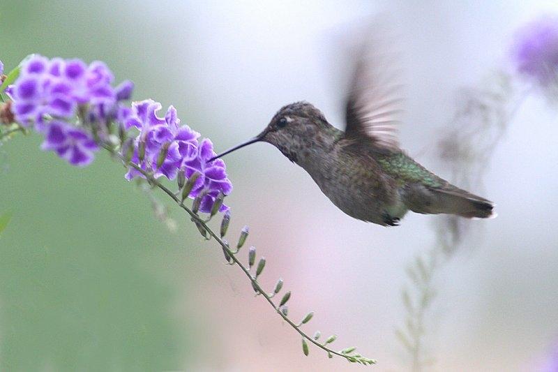 Картинки с птичками красивые   подборка 017