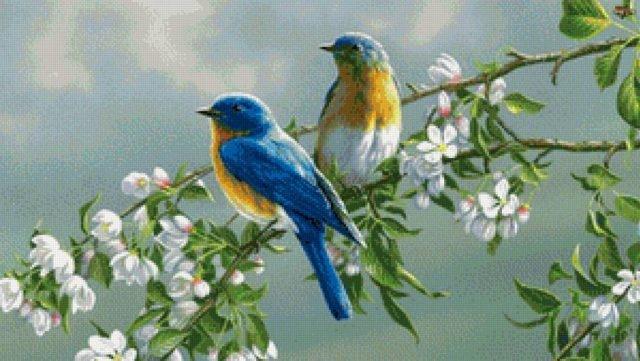 Картинки с птичками красивые   подборка 018