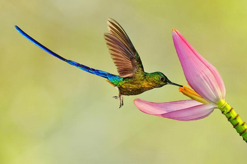 Картинки с птичками красивые   подборка 019