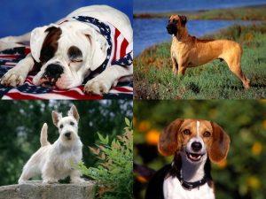 Картинки с собаками скачать бесплатно   подборка 001
