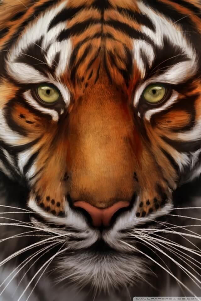 Тигры картинка на телефон