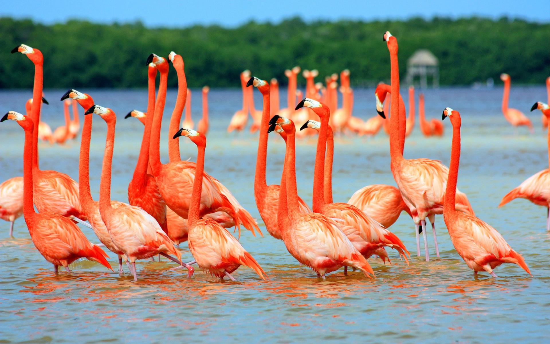 Картинки с фламинго на заставку   подборка (10)