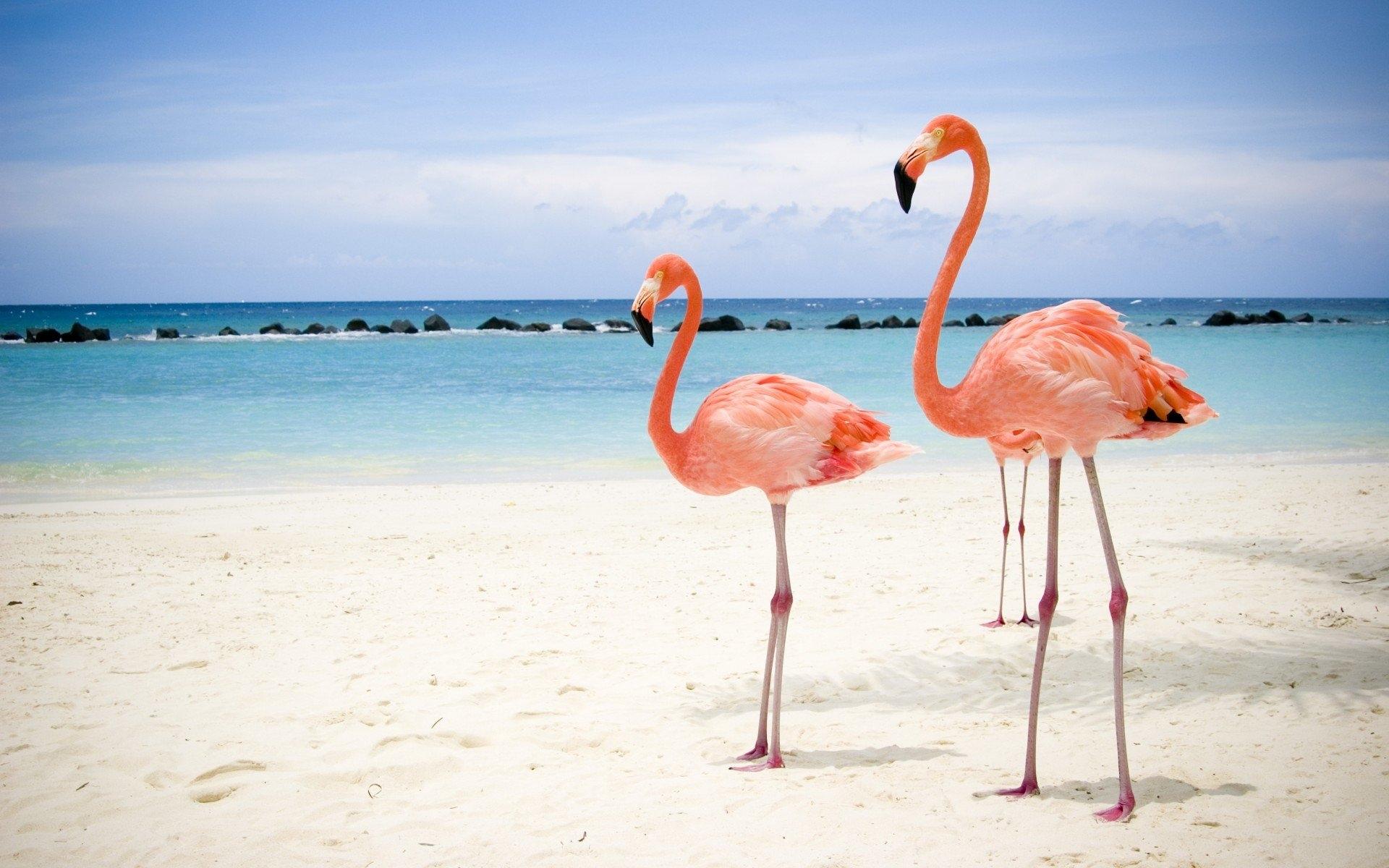 Картинки с фламинго на заставку   подборка (13)