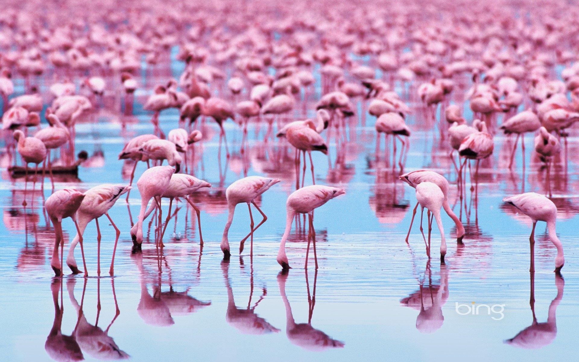 Картинки с фламинго на заставку   подборка (18)