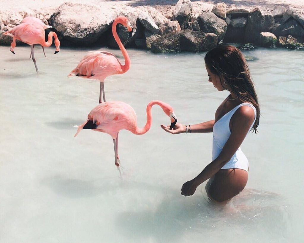 Картинки с фламинго на заставку   подборка (2)