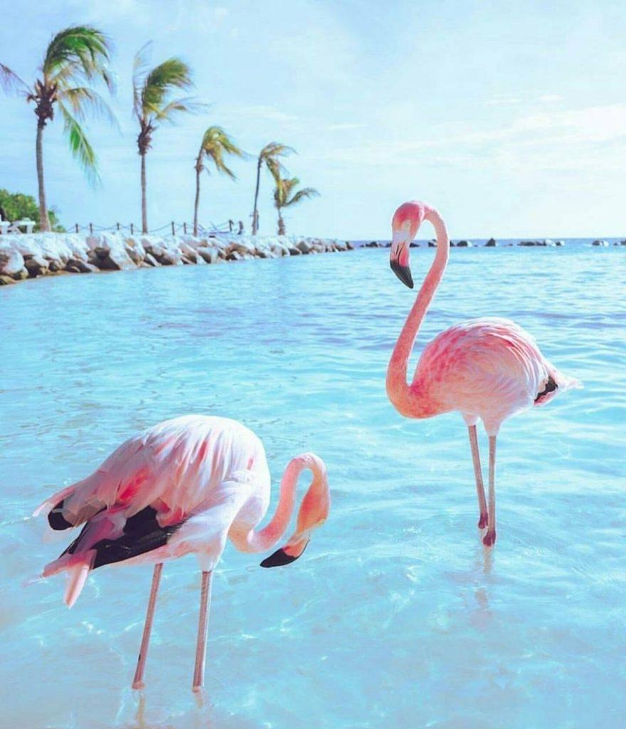 Картинки с фламинго на заставку   подборка (24)