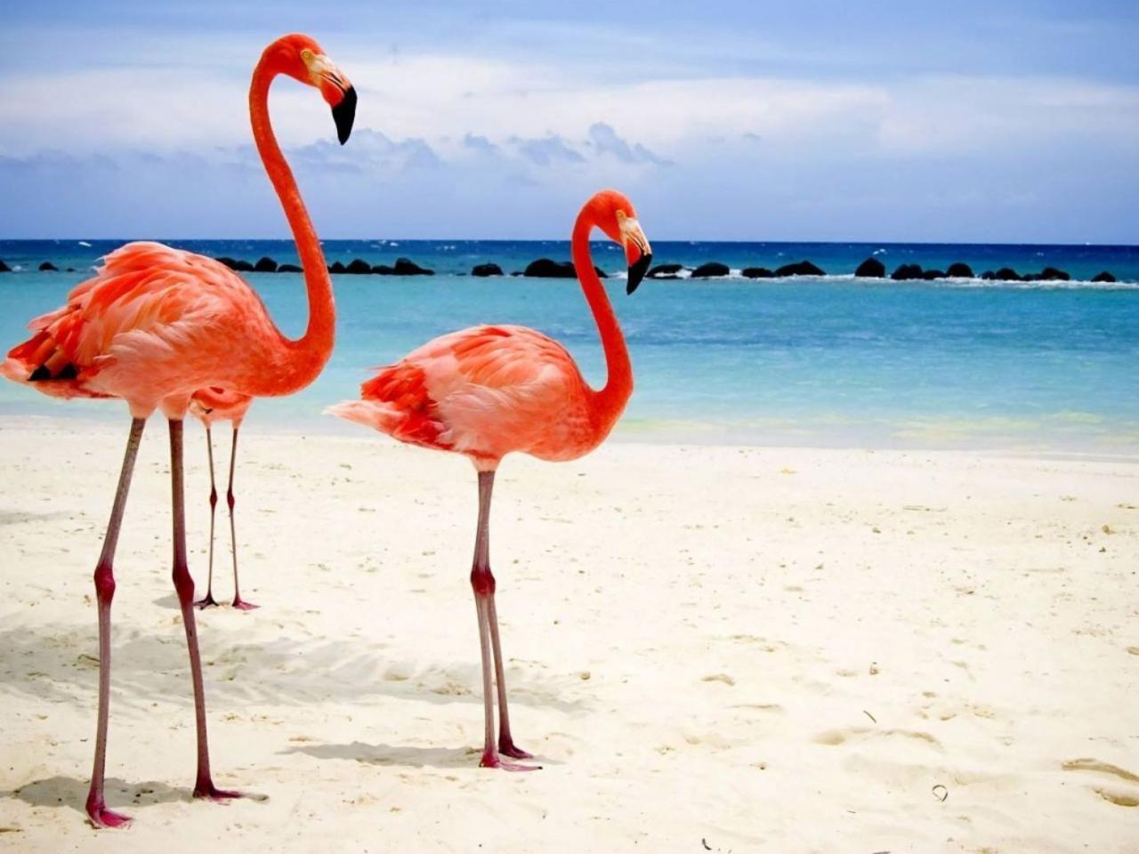 Картинки с фламинго на заставку   подборка (4)