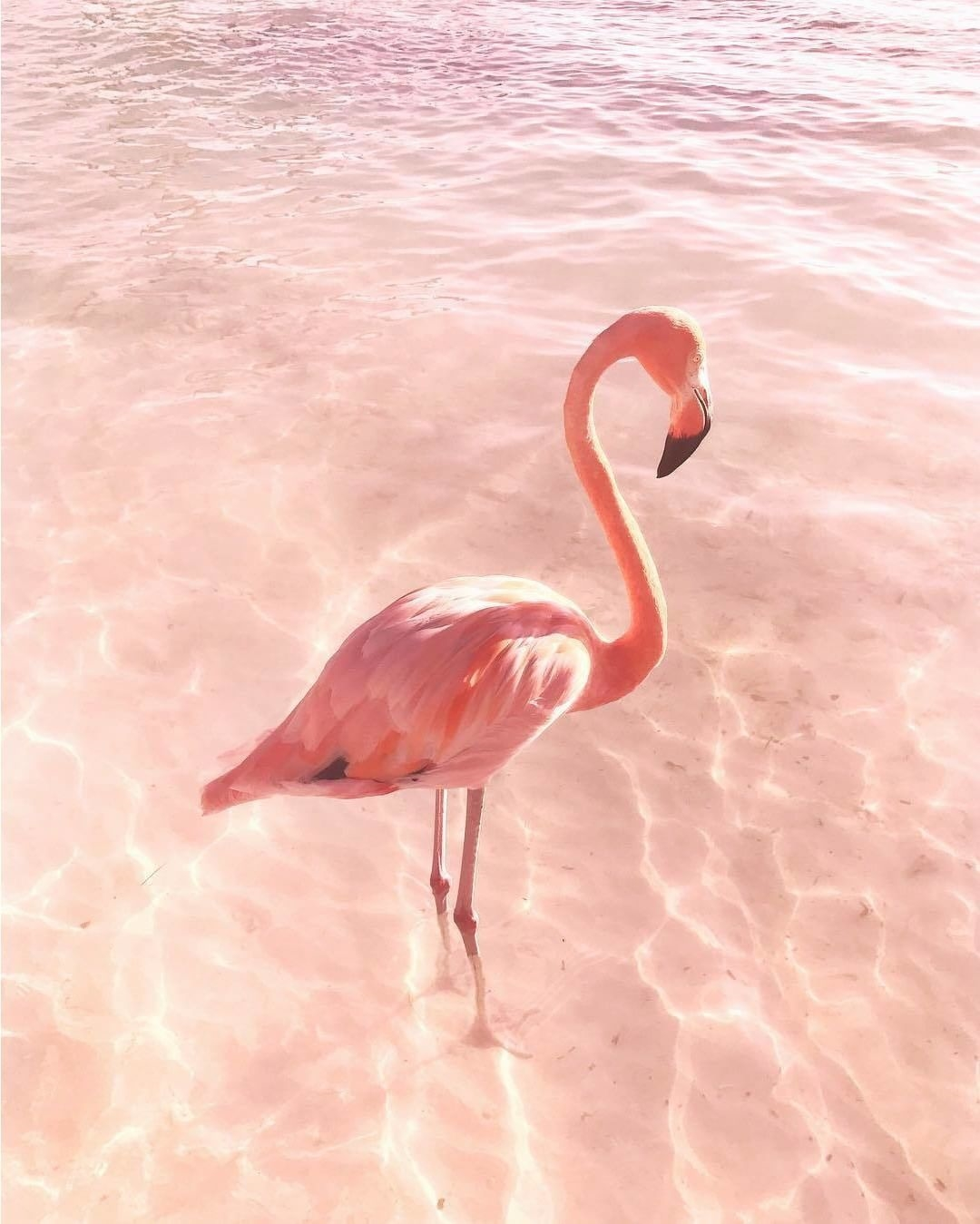 Картинки с фламинго на заставку   подборка (5)