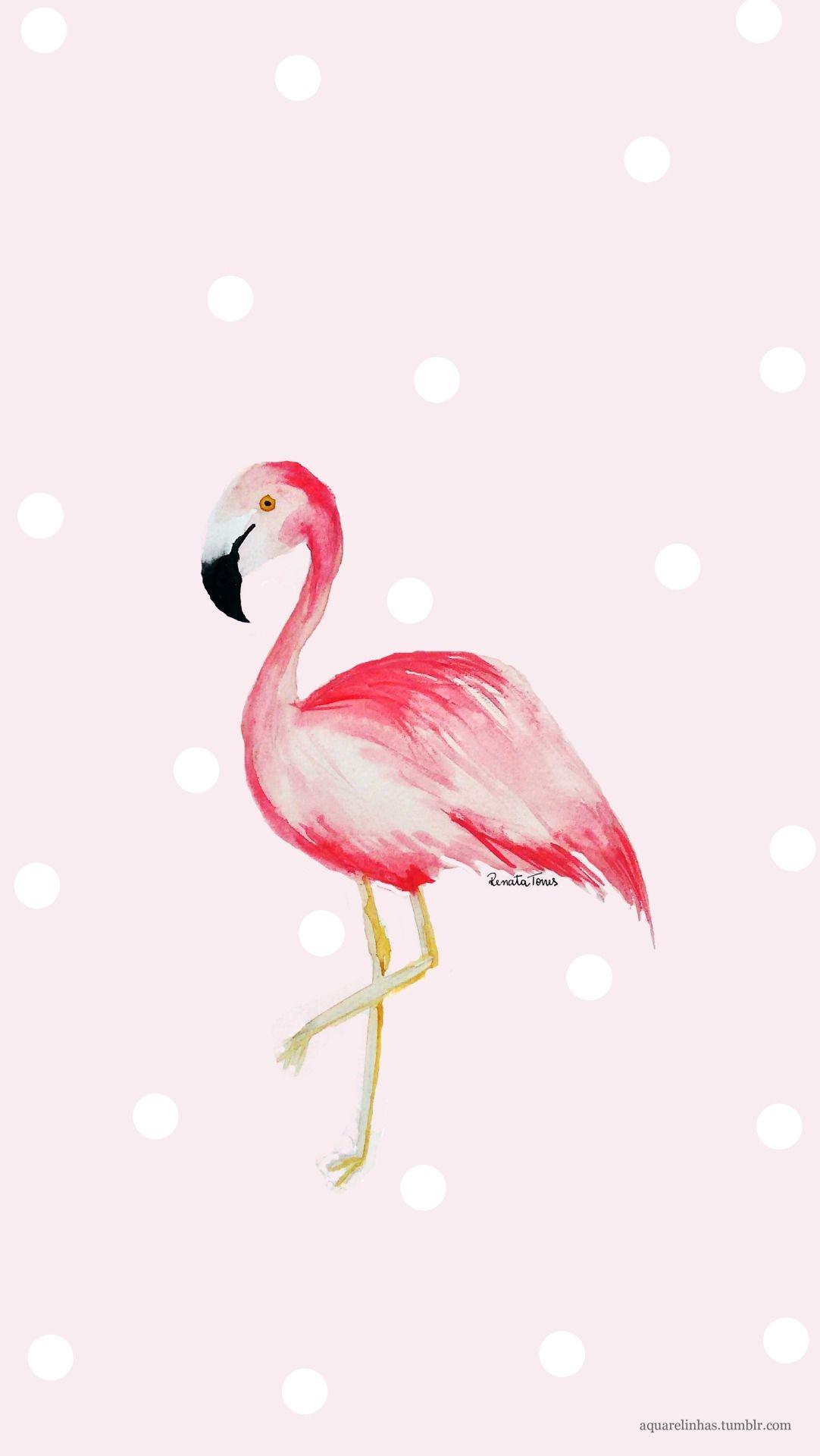 Картинки с фламинго на заставку   подборка (8)