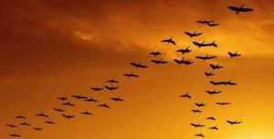 Картинки улетают птицы осенью   подборка 023