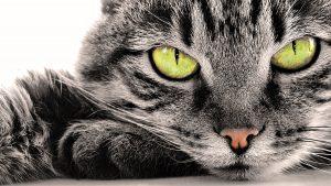 Картинки фон котики и кошки красивые 024