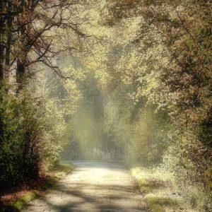 Картинки фон природа для фотошопа   подборка 026