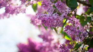 Картинки цветы красивые 1366х768023